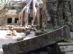Temple Ruins (Ta Prohm in Cambodia was built by the Khmer King Jayavarman VII as a Mahayana Buddhist monastery and university)